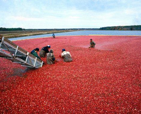 cranberry640